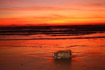 El Grave Problema Del Plástico En El Mar