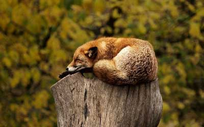 ¡A Dormir! La Ciencia Tras El Sueño