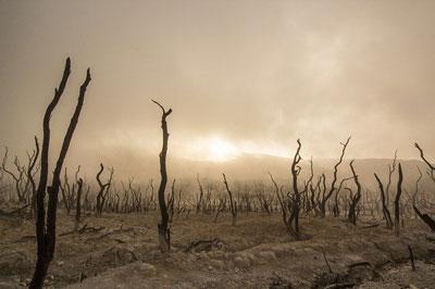 La Sexta Extinción Masiva Y El Fin De La Raza Humana