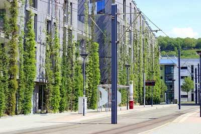 Biodiversidad Urbana: Una Apuesta Por La Vida